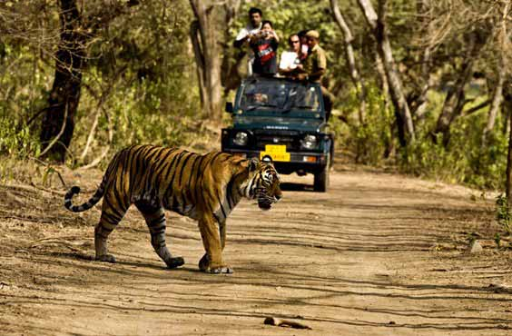 Best Indian Wildlife Tour Packages