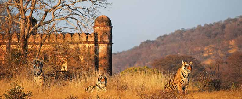 Jaipur Ranthambore Holiday tours Pacakges