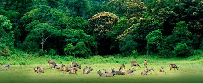 Periyar forest and Village tours-Kerala Holiday Tours