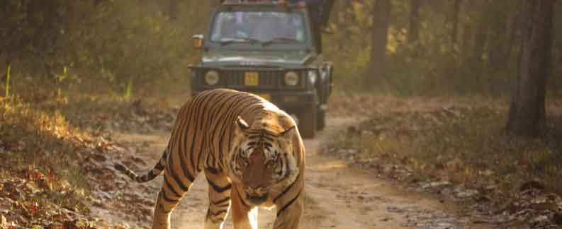 Kanha Tiger Reserve-Panorama Wildlife Tours packages