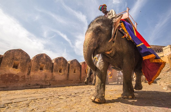 Rajasthan Family Holidays Tour Packages