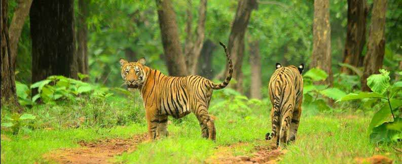 Tadoba for Wilds Tour
