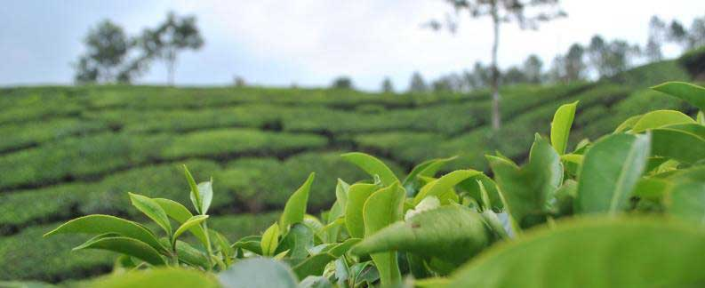 Dewalokam to Munnar-South India Tours Packages