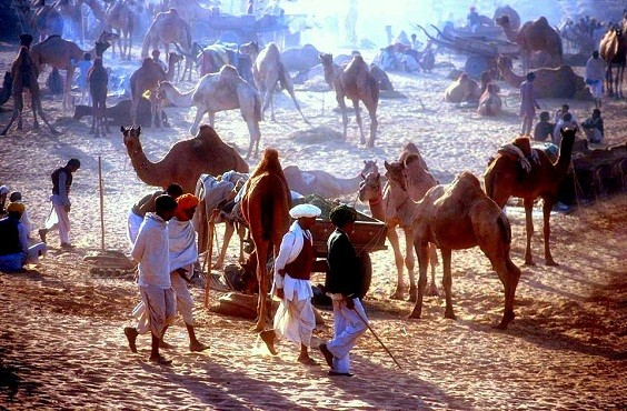 Pushkar Camel Fair 2017