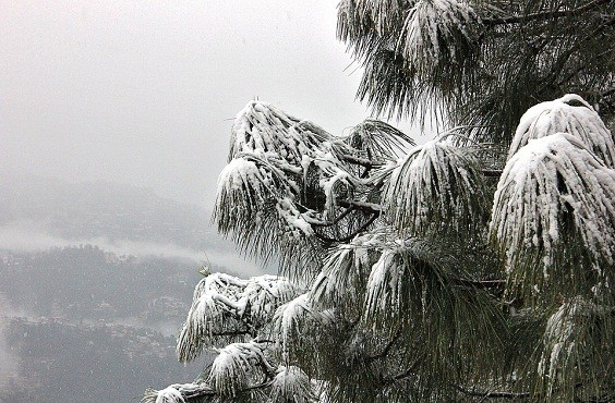 Best Shimla Holiday Tour Packages