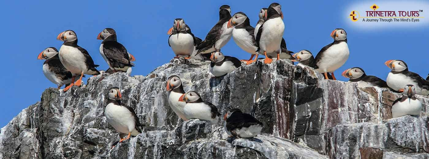 Alluring Arctic Birds