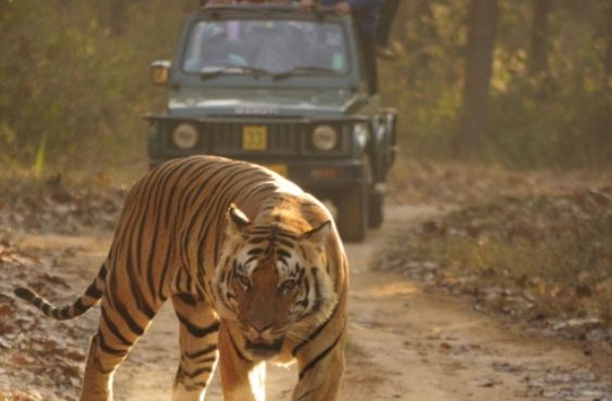 Indian Wildlife Panorama Tour Packages.