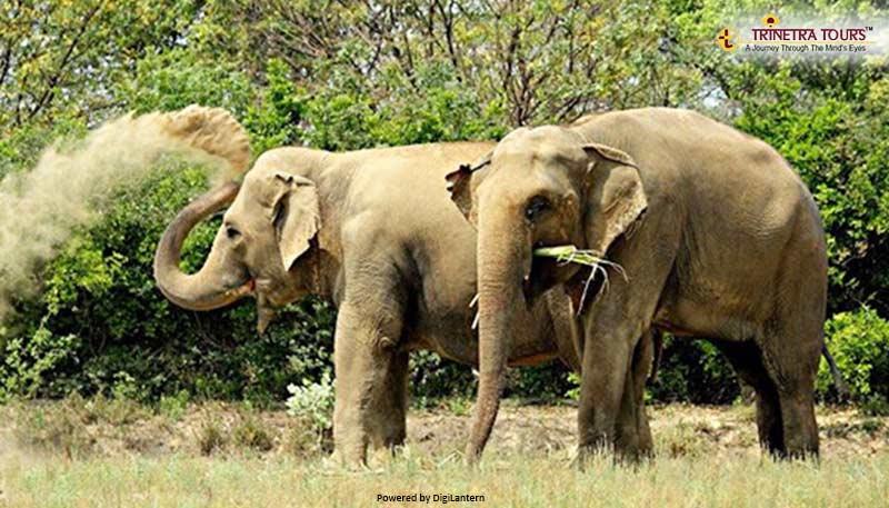 orpan-elephant