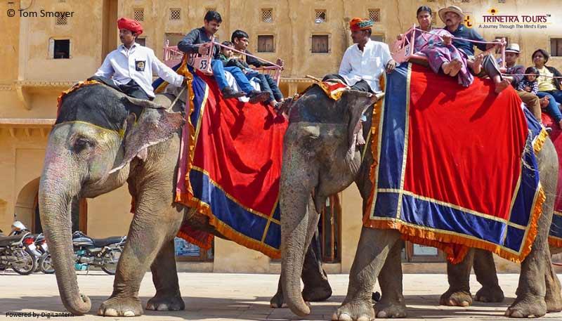 elephants-ride