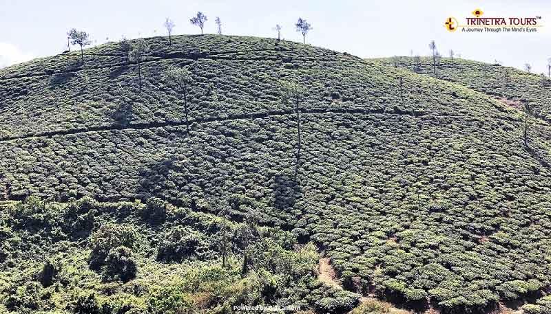 Periyar-Kumarakom